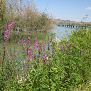 foto x territorio e dintorni lago di chiusi 5 __