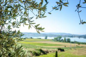 Agriturismi a Siena 5